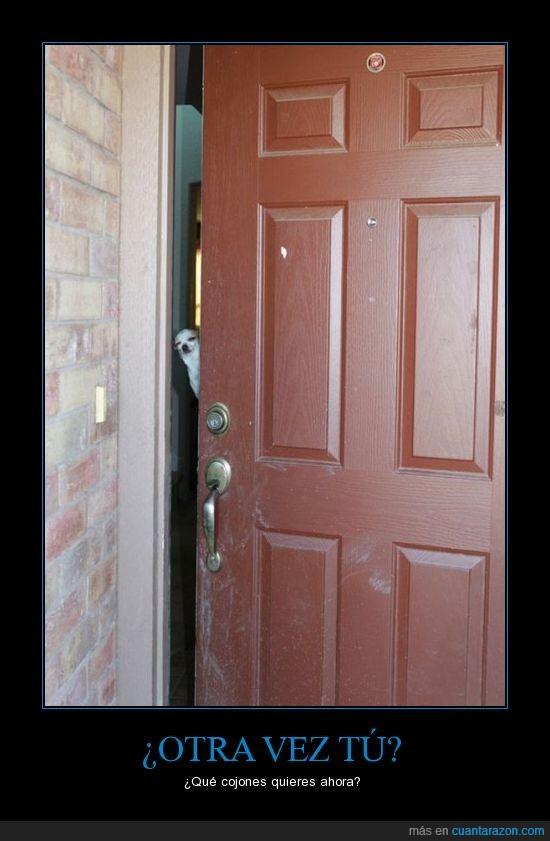 casa,mirada,perra,perro,puerta