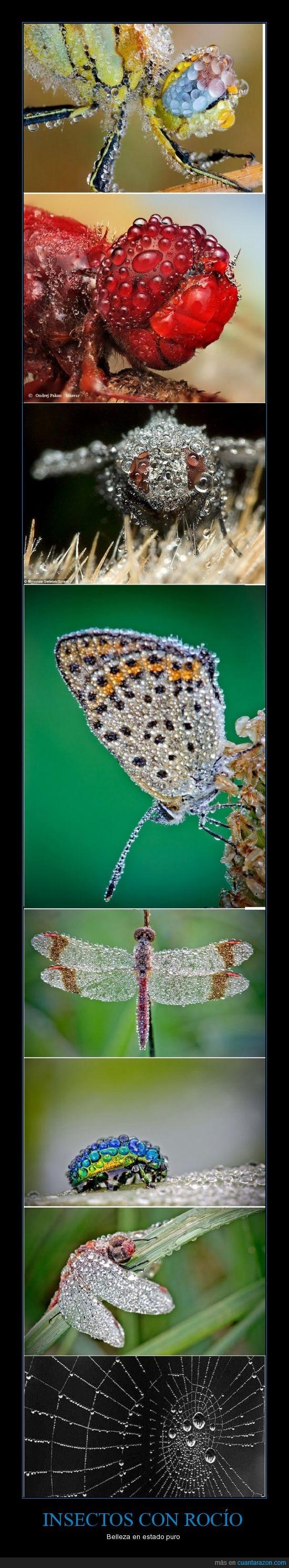 animales,belleza,insectos,naturaleza,rocio