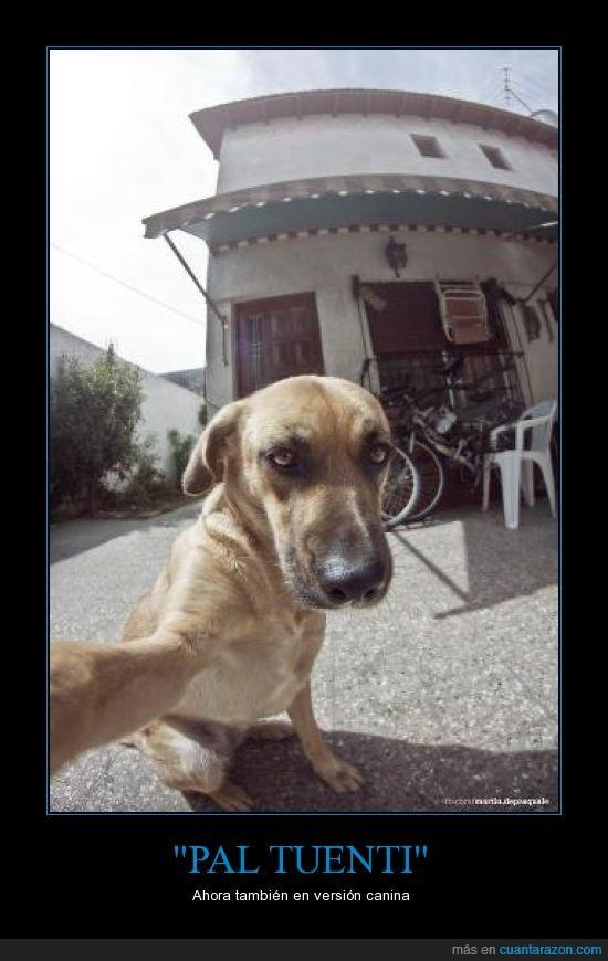 autofoto,martín de pasquale,perro,tuenti