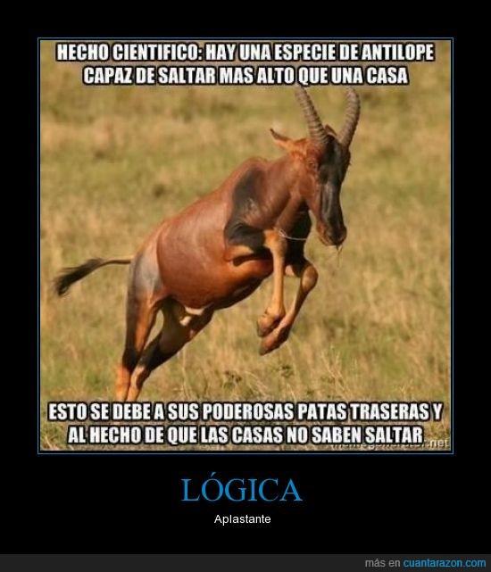 alto,antilope,casa,dato,pata,poderosa,saltar,trasera