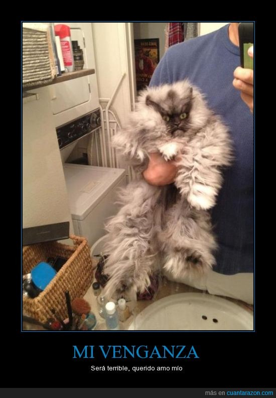 amo,gato,movil,peludo,venganza