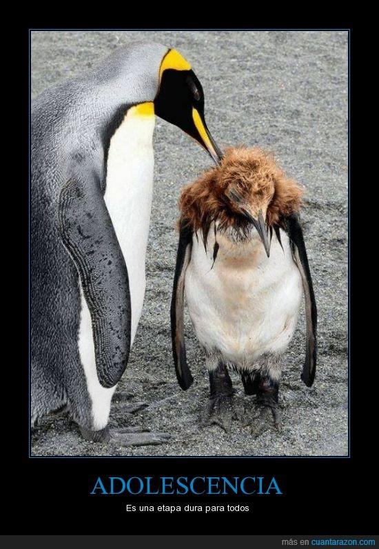 edad del pavo,feo,pelo,pinguino,pubertad