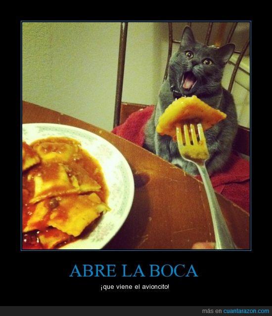 avioncito,comida,gato,pasta,tomate,tortellini