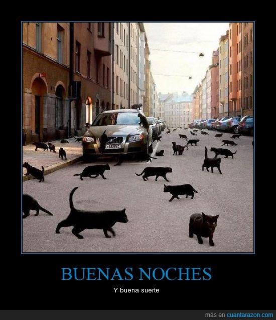 gatos,invasión,miedo