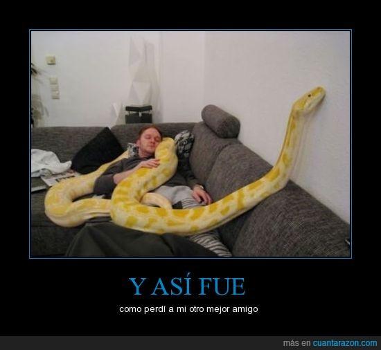 amarilla,amigos,animales,asesinato,dormir,gigante,lol,serpiente,sofa