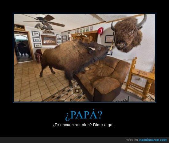 bisonte,buffalo,bull,cuernos,grande,pared