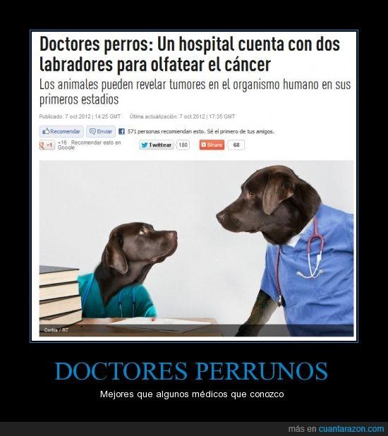 doctor,perros,quiero uno .