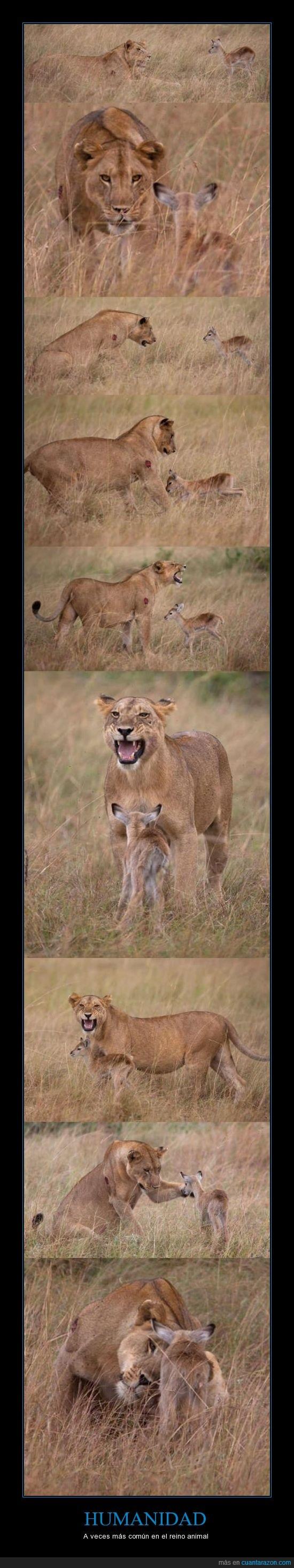 aprendemos mucho de esta imagen,humanidad,leona,Reino animal