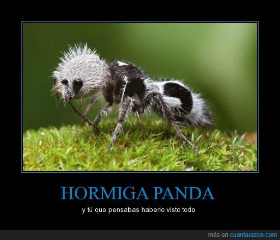 hormiga,naturaleza extraña,panda,peligro de extinción.,rara