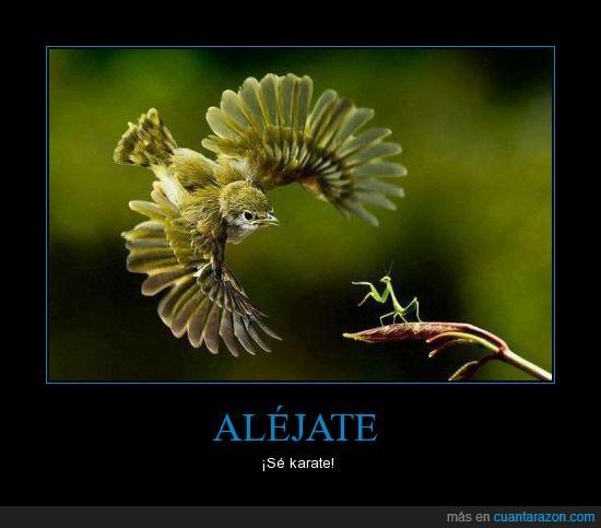 karate,mantis,naturaleza,pajaro