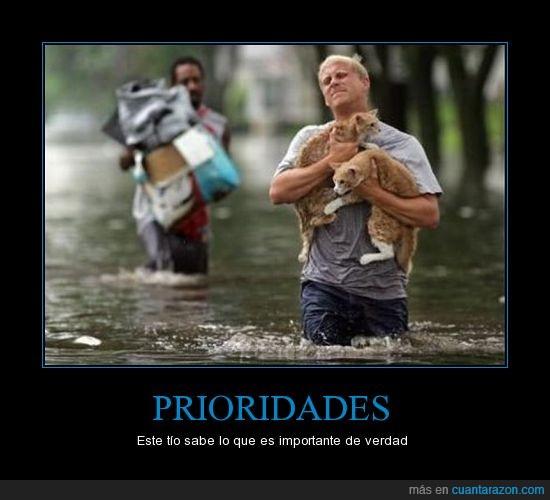 ayudar,inundacion,mascotas,prioridad,una buena persona con corazon