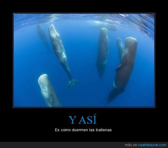 ballenas,dormir,mar,nunca me lo imaginé así,pie