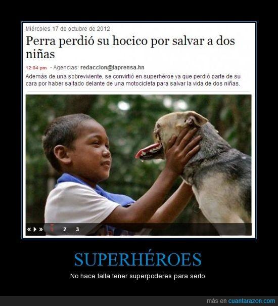 el mejor amigo del hombre,perra,salva niñas,superhéroes reales