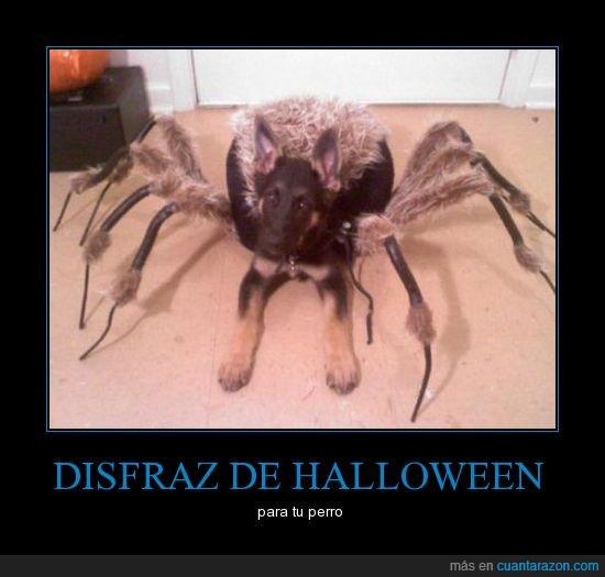 araña,disfraz,halloween,perro