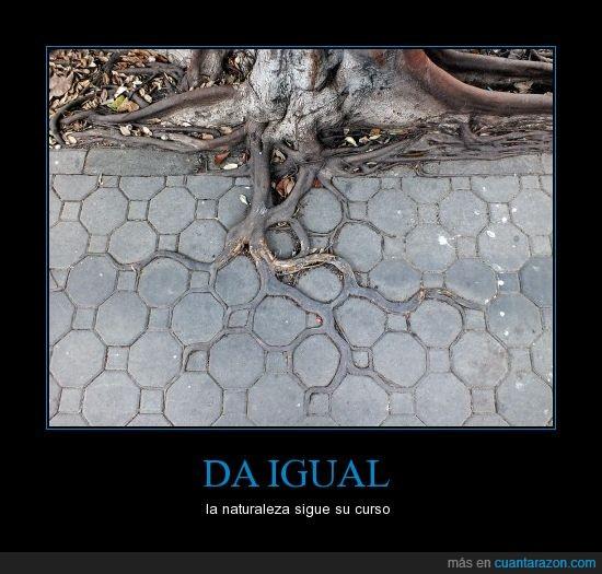 acera,arbol,asfalto,crecer,naturaleza,pavimento,raiz,suelo
