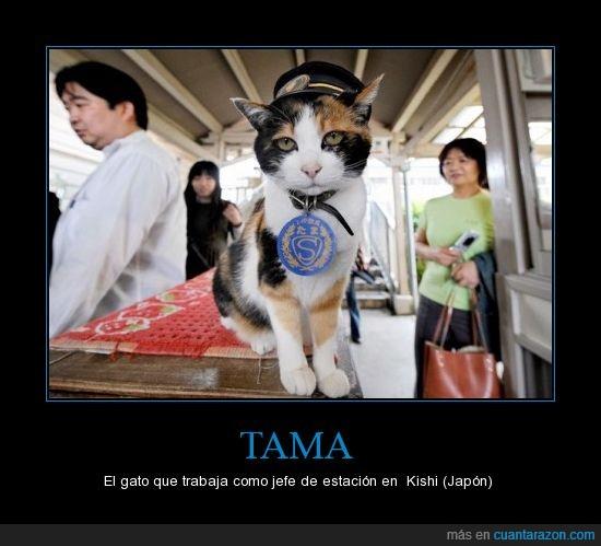 estacion,gato,japon,kishi,tama,tren