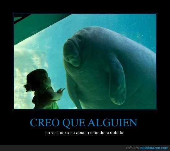 acuario,animales,foca,gordos,morsa,niña,sobrepeso