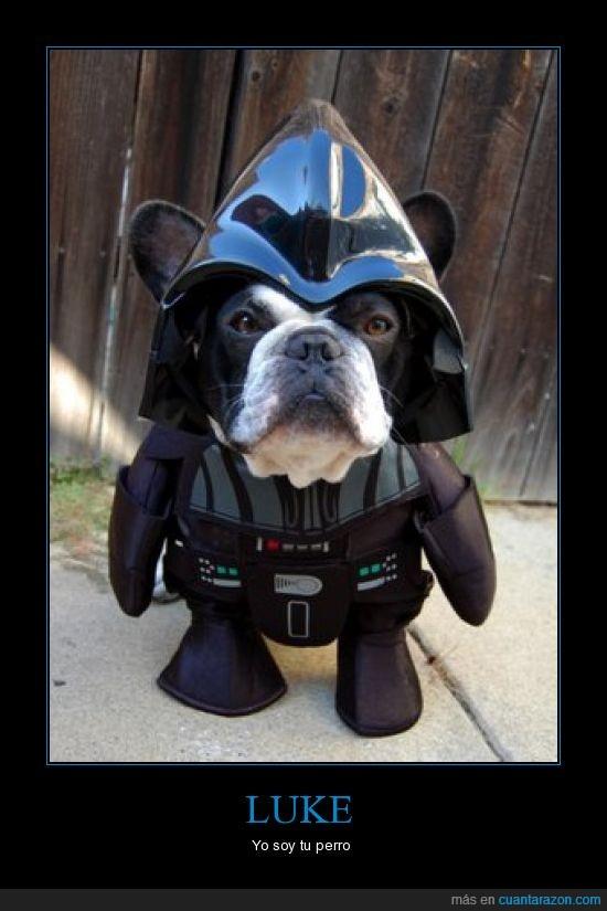 Darth Vader,Perro,Star Wars