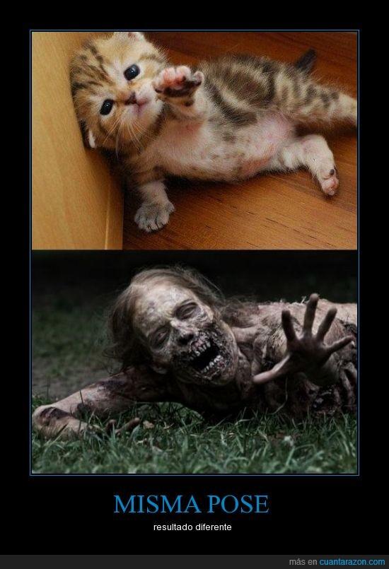 gatito,gato,sigue sin mi,the walking dead