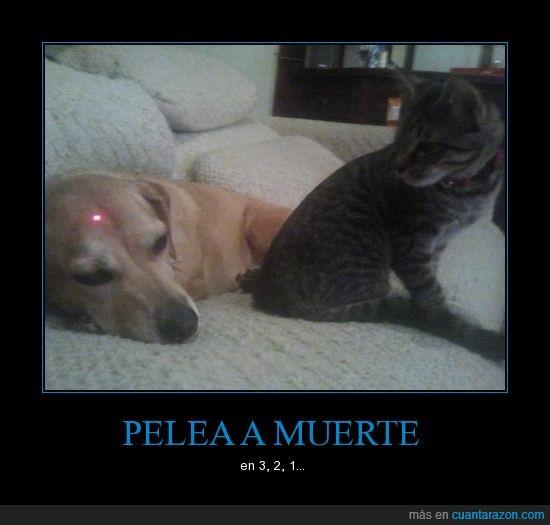 cabeza,gato,laser,pelea,perro,yo apuesto por el gato