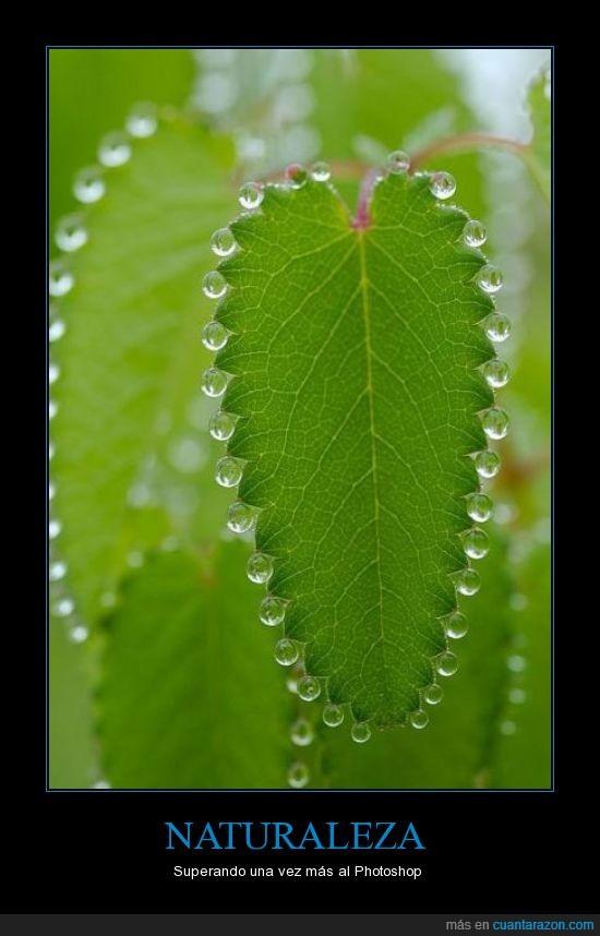 gota,hoja,perfecto lluvia,photoshop,rocio,verde