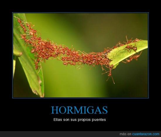 animales,cruzar,hormigas,me pica todo solo de verlo,naturaleza,nunca esniféis hormigas,puentes