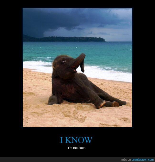 elefante,pose,que hace un elefante en la playa