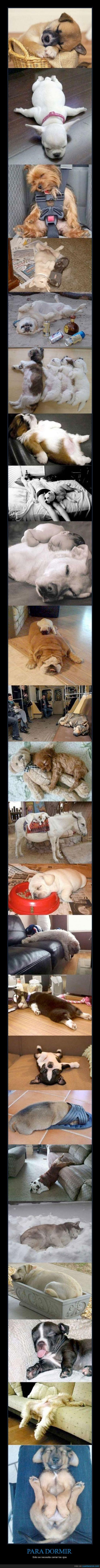 dormido,dormir,perros,postura,sueño