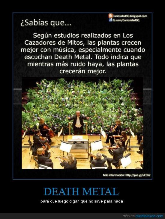 crecer,death metal,metal,plantas,rock,ruido