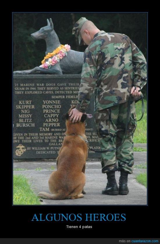 heroe,marine,memorial,perro,tumba