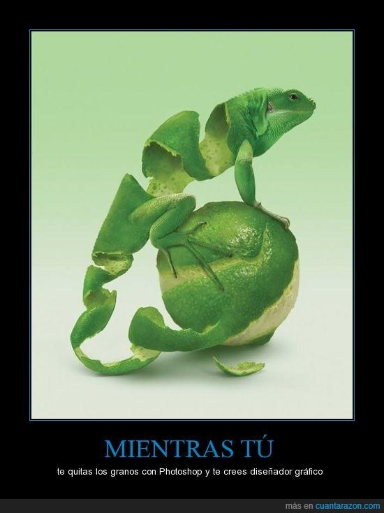 arte,iguana,lagarto,lima,limón,montaje,piel