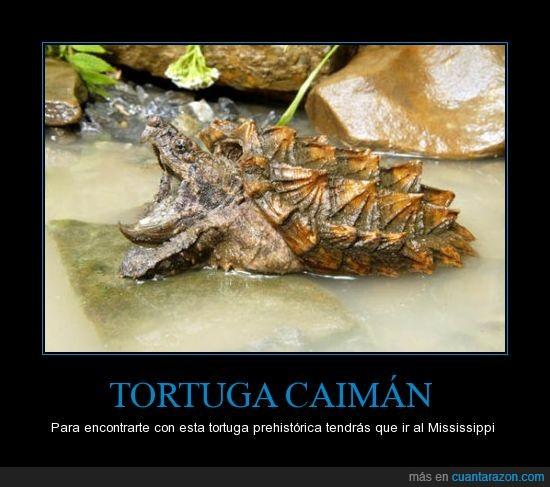 caiman,Mississipi,prehistorico,raro,rio,tortuga