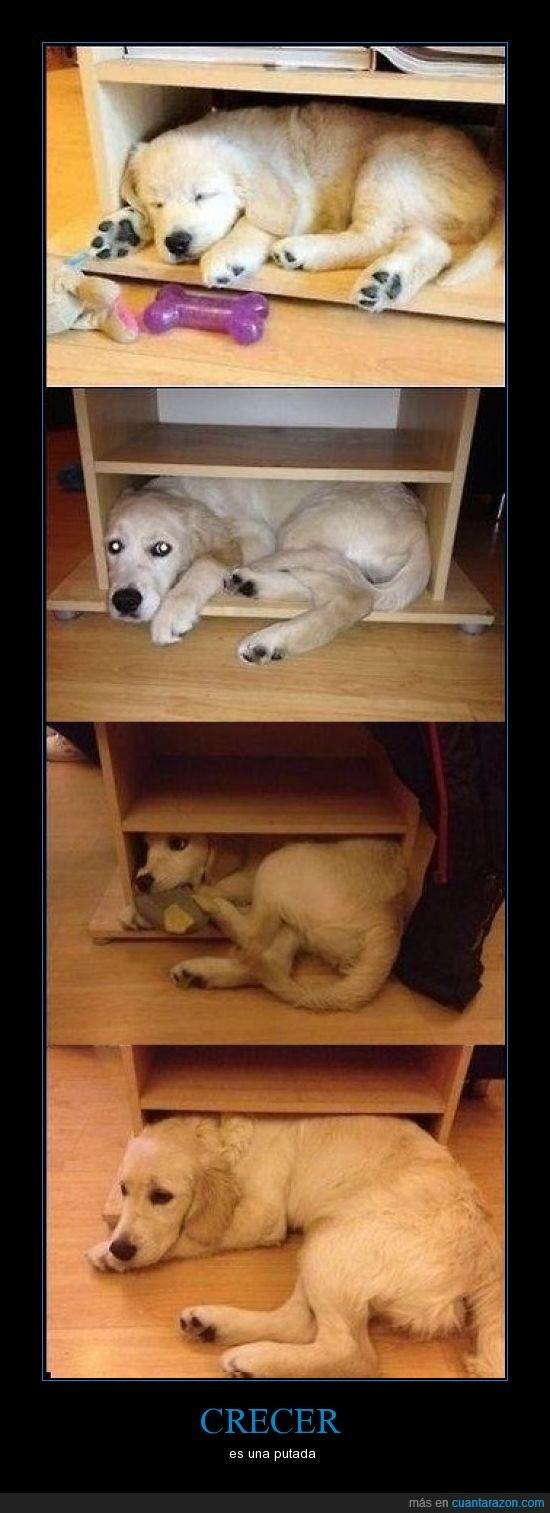 cachorro,crecer,perro,triste