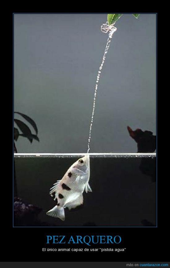 agua,arquero,chorro,es primo de Squirtle,pez