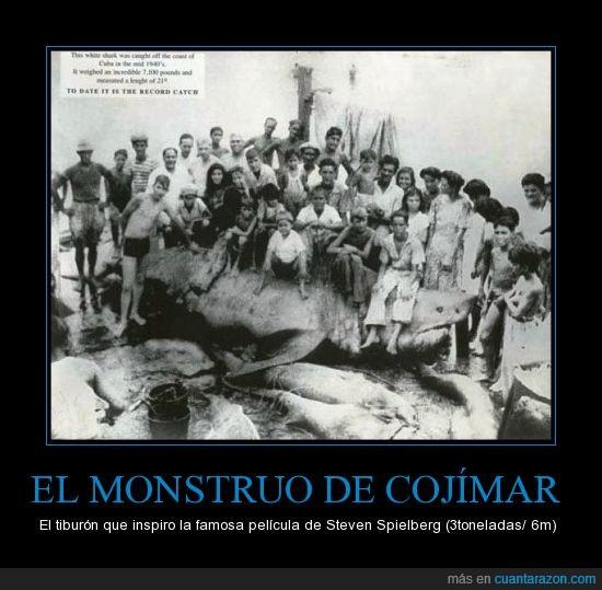 cazar,gigante,monstruo,spielberg,tiburón