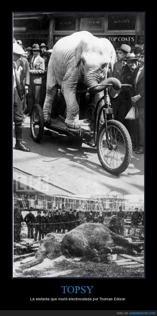 corriente alterna,crueldad,disputa,Edison,Tesla