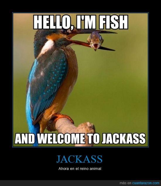 animal,hello,Jackass,Johnny Pezville,pájaro,pez