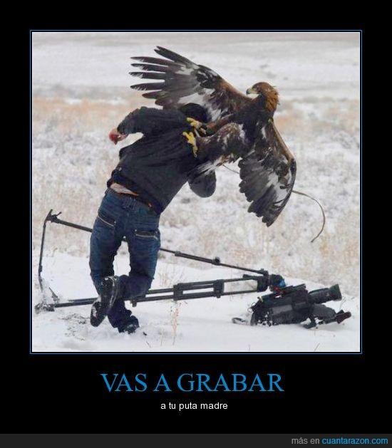 águila,atacando,cámara,foto