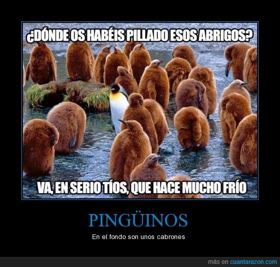 4 ever alone,frio,pinguinos marrones