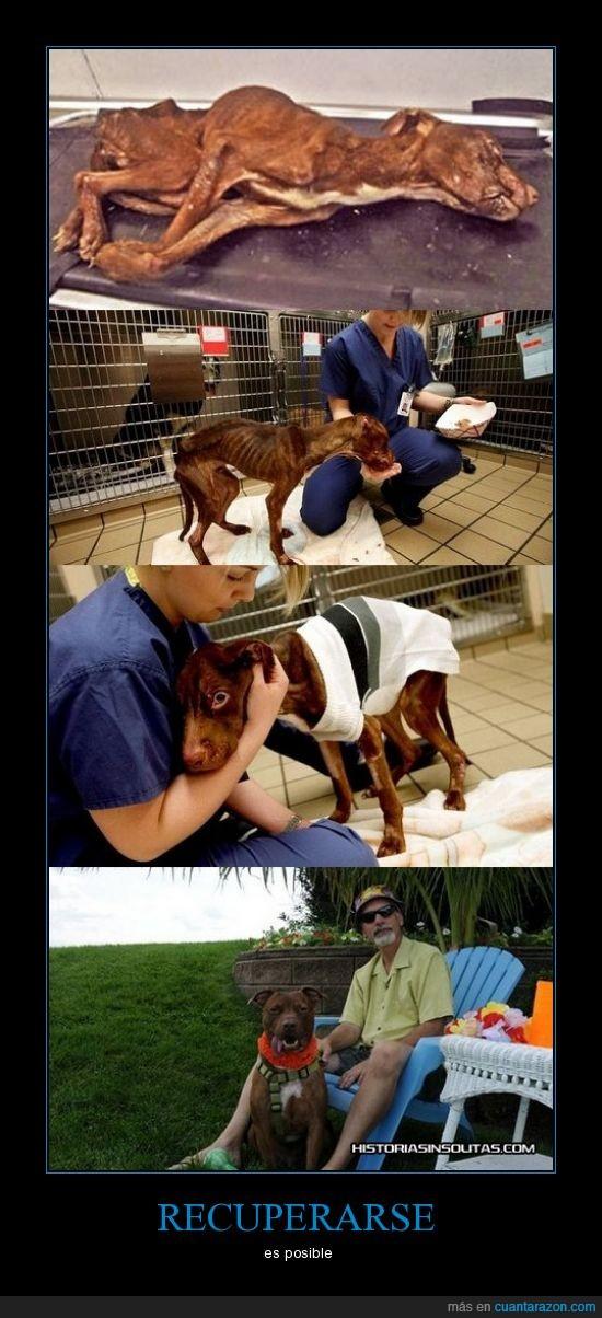 delgado,huesos,morir,perro,recuperado