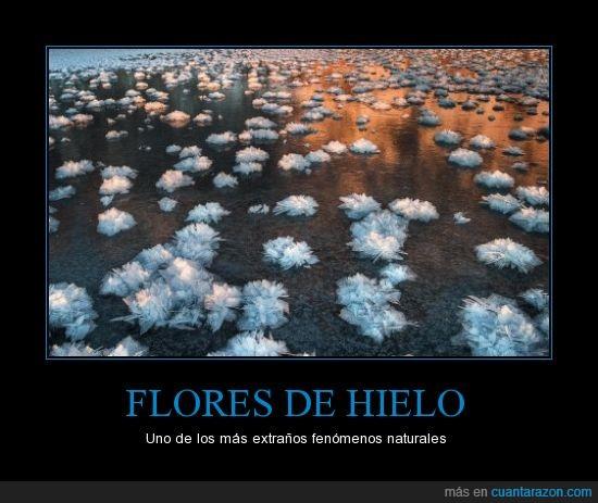 antartida,flores de hielo,hielo,mar