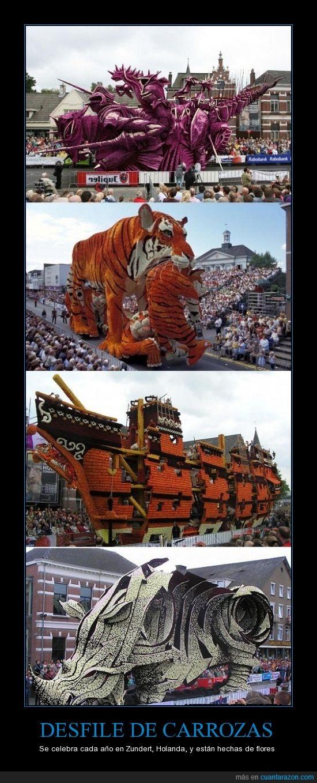 carrozas,desfile,flores,holanda,impresionante,tigre