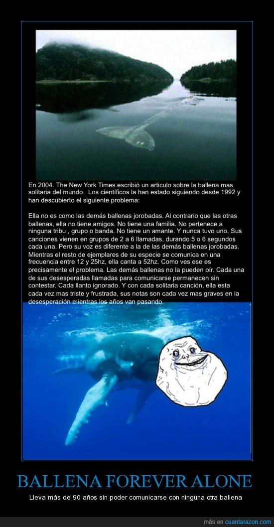 ballena,comunicar,forever alone,frecuencia,hz