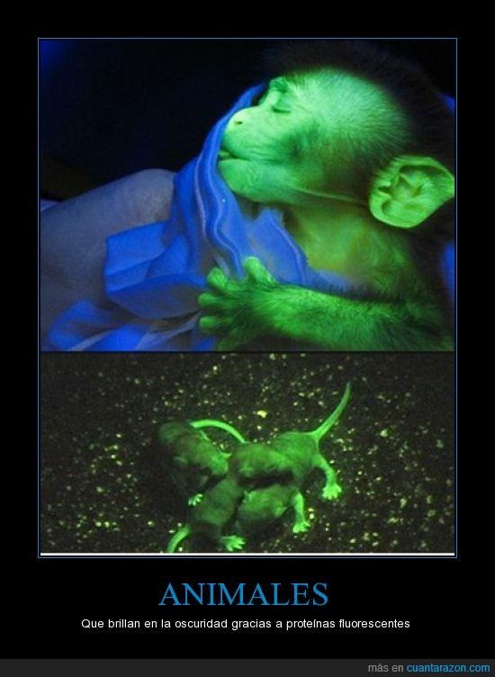 animales,brillan,fluorescentes,oscuridad,proteínas