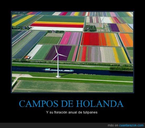 Holanda,Norte de Holanda,Parece Pintado,Solo florecen dos semanas cada año,Tulipanes