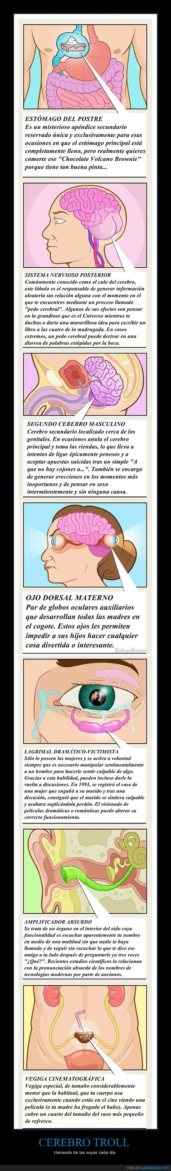 cerebro,estómago del postre,gracioso,ojo dorsal materno,segundo cerebro masculino,sistema nervioso posterior,troll