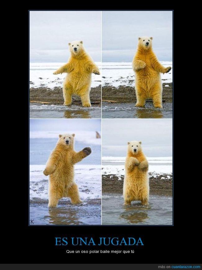 bailar,baile,mejor que tú,oso polar