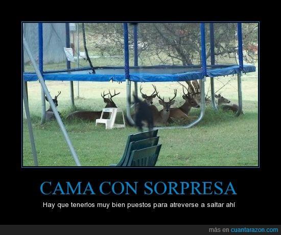 cama elástica,ciervos,cuernos,renos