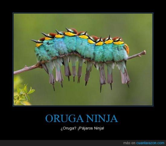 Animales,Árbol,Azul,Naturaleza,Ninja,Oruga,Pájaros