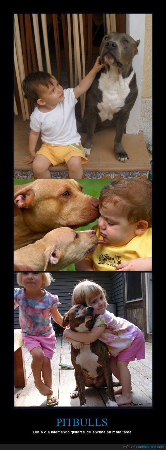 cariñosos,niños,peligroso,perro,Pitbulls
